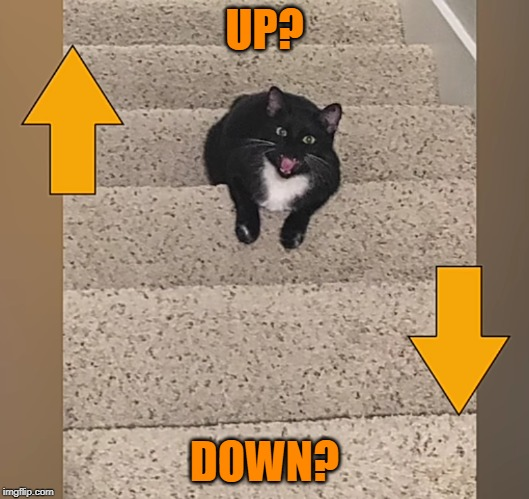 Cat asked: UP or DOWN? |  UP? DOWN? | image tagged in funny,illusions,cats,up and down,question,stairs | made w/ Imgflip meme maker