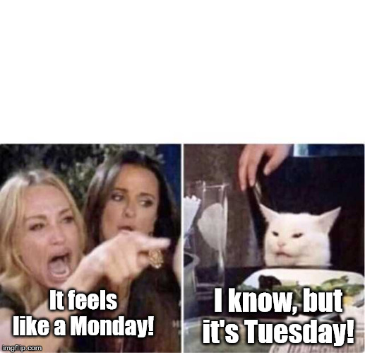 Real housewives screaming cat | It feels like a Monday! I know, but it's Tuesday! | image tagged in real housewives screaming cat | made w/ Imgflip meme maker