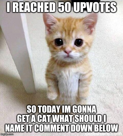 Cute Cat | I REACHED 50 UPVOTES SO TODAY IM GONNA GET A CAT WHAT SHOULD I NAME IT COMMENT DOWN BELOW | image tagged in memes,cute cat | made w/ Imgflip meme maker