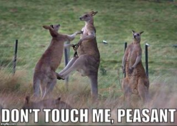 Meanwhile in Australia | image tagged in kangaroo,peasant,australia | made w/ Imgflip meme maker