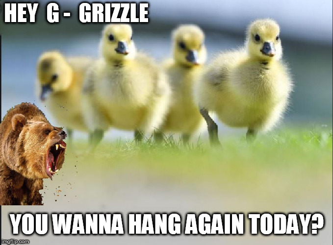 Birds of a FEATHER...... |  HEY  G -  GRIZZLE; YOU WANNA HANG AGAIN TODAY? | image tagged in big   bear,babe  ducks,hang out,today,fo  rizzle,yeah | made w/ Imgflip meme maker