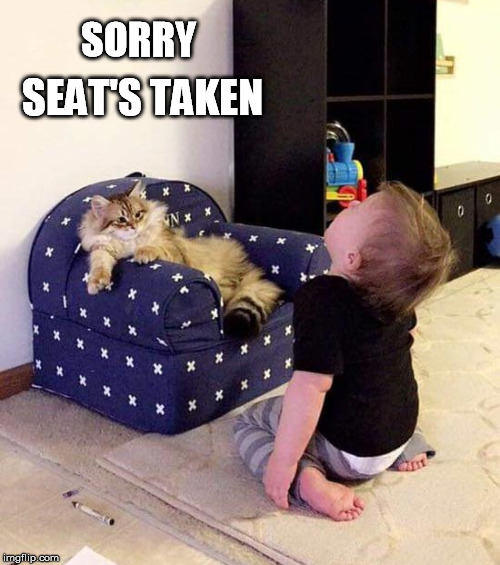 You can't sit here |  SORRY; SEAT'S TAKEN | image tagged in seat,taken,cat | made w/ Imgflip meme maker