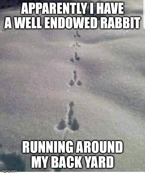 Big Bunny | APPARENTLY I HAVE A WELL ENDOWED RABBIT RUNNING AROUND MY BACK YARD | image tagged in rabbit,funny,yard | made w/ Imgflip meme maker