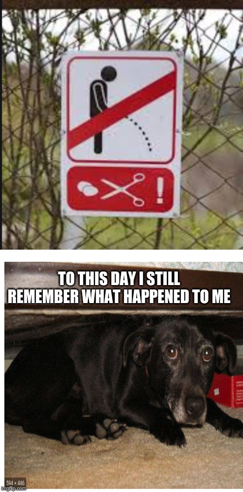scared dog |  TO THIS DAY I STILL REMEMBER WHAT HAPPENED TO ME | image tagged in memes,blank transparent square,funny,strange sign,scared dog | made w/ Imgflip meme maker