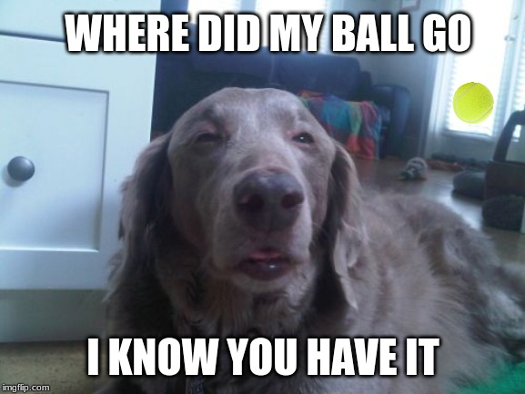 High Dog | WHERE DID MY BALL GO I KNOW YOU HAVE IT | image tagged in memes,high dog | made w/ Imgflip meme maker
