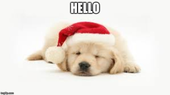 HELLO | image tagged in cute puppies | made w/ Imgflip meme maker