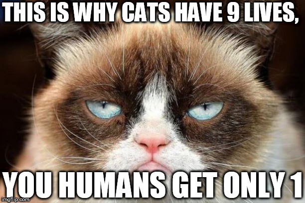 THIS IS WHY CATS HAVE 9 LIVES, YOU HUMANS GET ONLY 1 | made w/ Imgflip meme maker