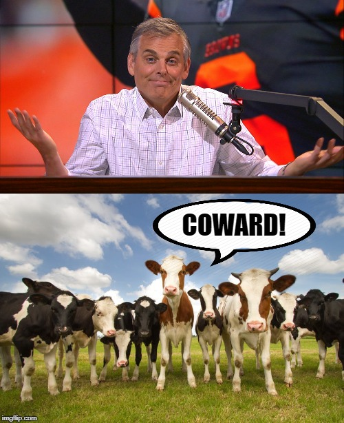 Yep | COWARD! | image tagged in farm animals,dad joke | made w/ Imgflip meme maker