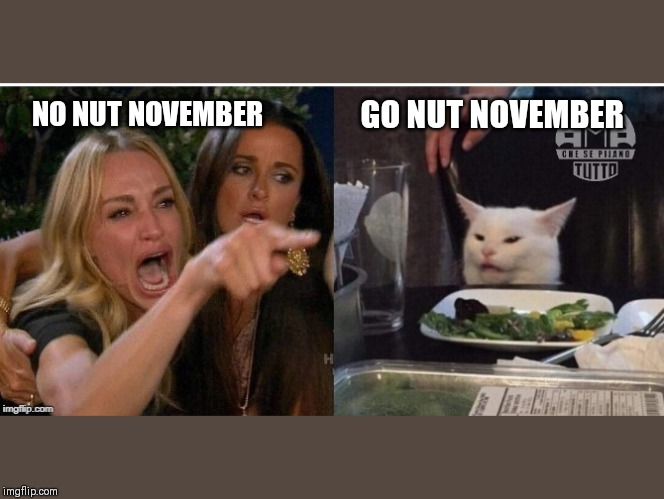 white cat table |  GO NUT NOVEMBER; NO NUT NOVEMBER | image tagged in white cat table | made w/ Imgflip meme maker