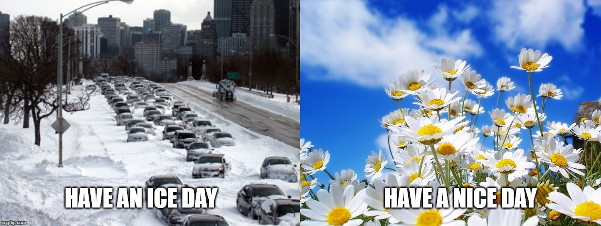 HAVE AN ICE DAY                                       HAVE A NICE DAY | image tagged in spring daisy flowers,winter storm | made w/ Imgflip meme maker