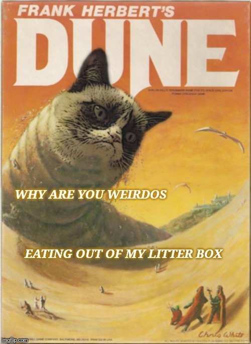 Kwisatz Caterach |  WHY ARE YOU WEIRDOS; EATING OUT OF MY LITTER BOX | image tagged in grumpy cat,dune,spice | made w/ Imgflip meme maker