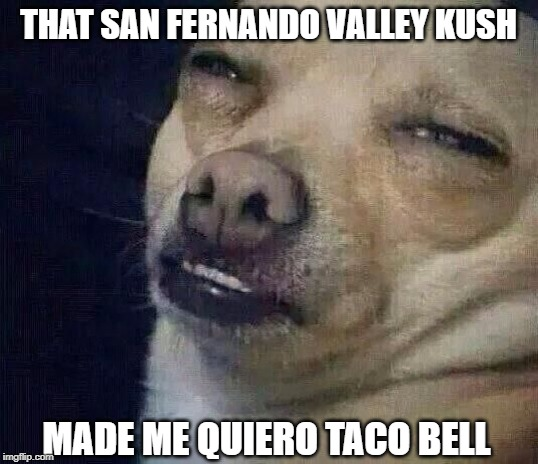 Even Doggos Get the Munchies - And Even Doggos Enjoy Eating Taco Bell When They Have the Munchies! |  THAT SAN FERNANDO VALLEY KUSH; MADE ME QUIERO TACO BELL | image tagged in too dank,taco bell,smoke weed everyday,doggos | made w/ Imgflip meme maker