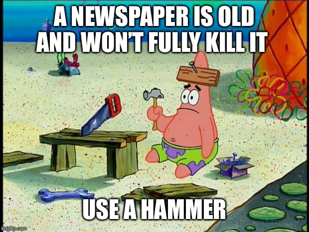Patrick  | A NEWSPAPER IS OLD AND WON'T FULLY KILL IT USE A HAMMER | image tagged in patrick | made w/ Imgflip meme maker