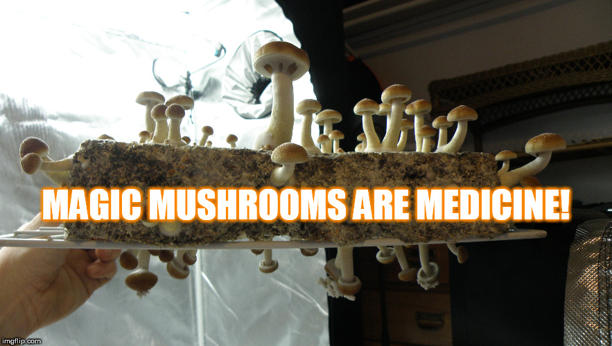Magic Mushrooms Reduce Anxiety! | MAGIC MUSHROOMS ARE MEDICINE! | image tagged in shrooms,magic mushrooms,mushrooms,psychedelics | made w/ Imgflip meme maker