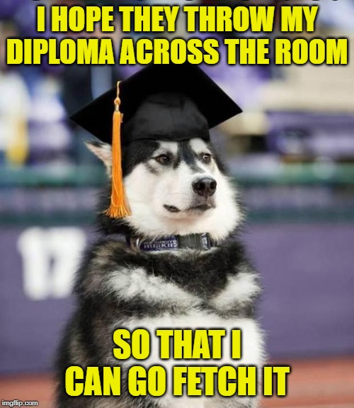 Masters degree | I HOPE THEY THROW MY DIPLOMA ACROSS THE ROOM SO THAT I CAN GO FETCH IT | image tagged in graduate dog,memes,dog | made w/ Imgflip meme maker