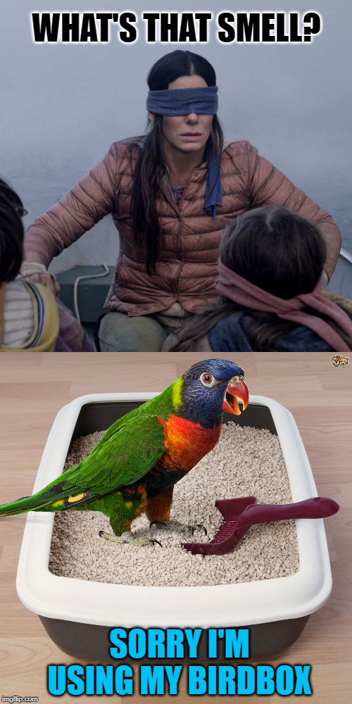 The Birdbox | WHAT'S THAT SMELL? SORRY I'M USING MY BIRDBOX | image tagged in memes,bird box,bird,stink,funny memes,litter box | made w/ Imgflip meme maker