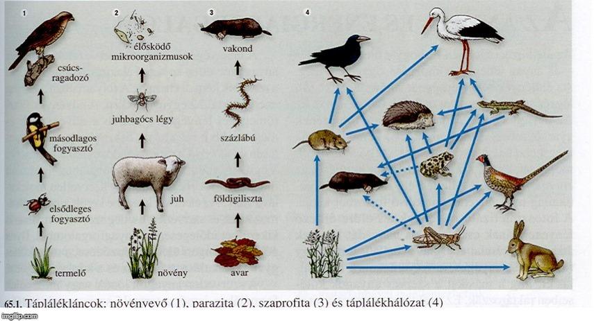 a földigiliszta parazita