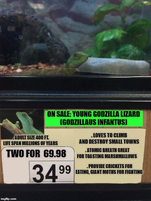 pet sale | ON SALE: YOUNG GODZILLA LIZARD (GODZILLAUS INFANTUS) . ADULT SIZE 400 FT. LIFE SPAN MILLIONS OF YEARS . LOVES TO CLIMB AND DESTROY SMALL TOW | image tagged in lizard,godzilla approved | made w/ Imgflip meme maker
