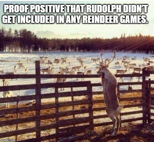 PROOF POSITIVE THAT RUDOLPH DIDN'T GET INCLUDED IN ANY REINDEER GAMES. | image tagged in rudolph | made w/ Imgflip meme maker