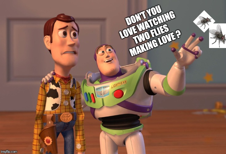 Don't you love watching... | DON'T YOU LOVE WATCHING TWO FLIES MAKING LOVE ? | image tagged in memes,x x everywhere | made w/ Imgflip meme maker