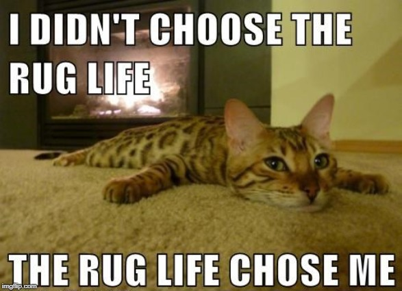 The Rug Life | image tagged in memes,funny,cats,thug life | made w/ Imgflip meme maker