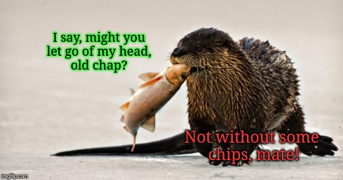 Not gonna happen, mate. | I say, might you  let go of my head,  old chap? Not without some  chips, mate! | image tagged in otter,animals | made w/ Imgflip meme maker