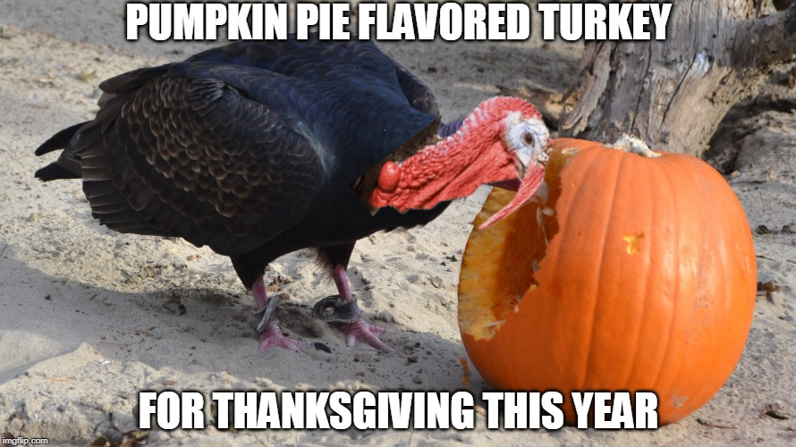HE'S GONNA TASTE REAL NICE |  PUMPKIN PIE FLAVORED TURKEY; FOR THANKSGIVING THIS YEAR | image tagged in turkey,pumpkin,thanksgiving | made w/ Imgflip meme maker