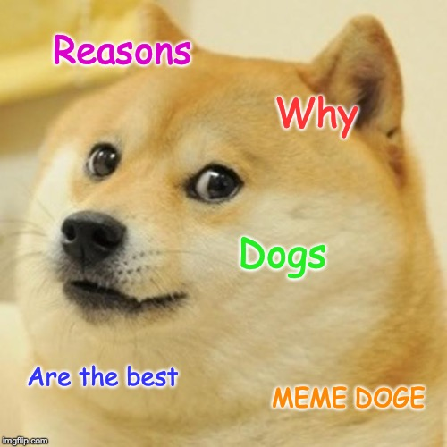Doge |  Reasons; Why; Dogs; Are the best; MEME DOGE | image tagged in memes,doge | made w/ Imgflip meme maker