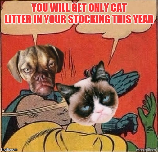Grumpy Dog Slapping Grumpy Cat | YOU WILL GET ONLY CAT LITTER IN YOUR STOCKING THIS YEAR | image tagged in grumpy dog slapping grumpy cat | made w/ Imgflip meme maker