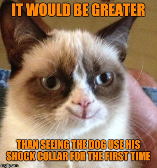 grumpy smile | IT WOULD BE GREATER THAN SEEING THE DOG USE HIS SHOCK COLLAR FOR THE FIRST TIME | image tagged in grumpy smile | made w/ Imgflip meme maker