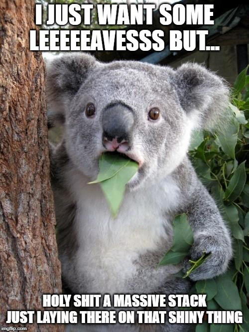 Surprised Koala Meme | I JUST WANT SOME LEEEEEAVESSS BUT... HOLY SHIT A MASSIVE STACK JUST LAYING THERE ON THAT SHINY THING | image tagged in memes,surprised koala | made w/ Imgflip meme maker