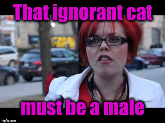 Smiling feminist | That ignorant cat must be a male | image tagged in smiling feminist | made w/ Imgflip meme maker