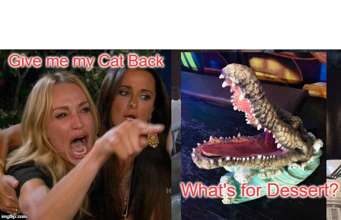 Woman Yelling At Cat Meme | Give me my Cat Back What's for Dessert? | image tagged in memes,woman yelling at cat | made w/ Imgflip meme maker