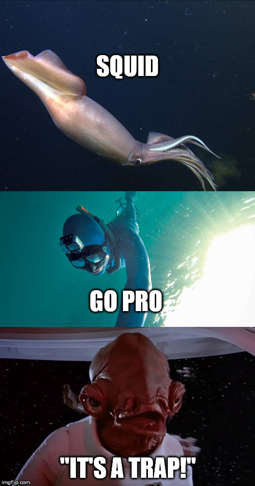 "Just keep Swimming... |  SQUID; GO PRO; ""IT'S A TRAP!"" 