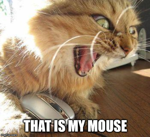 angry cat | THAT IS MY MOUSE | image tagged in angry cat | made w/ Imgflip meme maker
