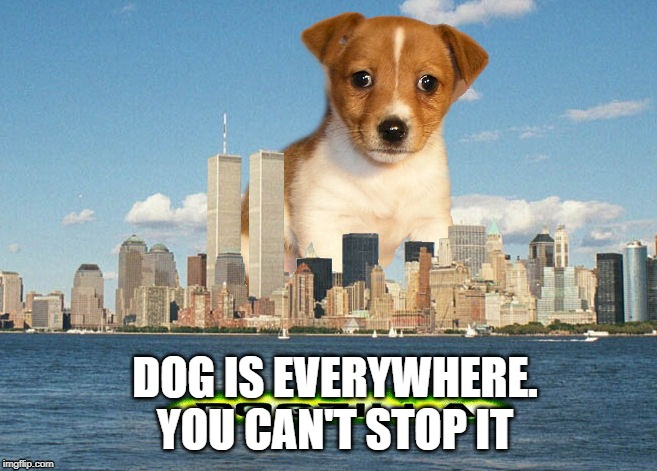 You cant stop it | DOG IS EVERYWHERE. YOU CAN'T STOP IT | image tagged in dog,fun,cute,soft,fluffy | made w/ Imgflip meme maker