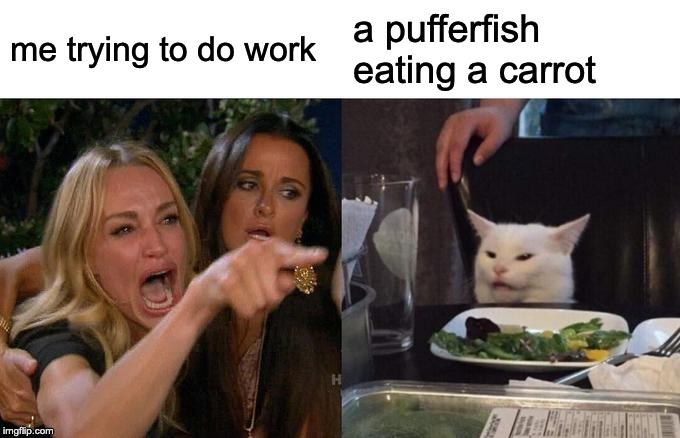 Woman Yelling At Cat |  me trying to do work; a pufferfish eating a carrot | image tagged in memes,woman yelling at cat | made w/ Imgflip meme maker
