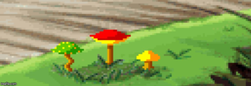Mushrooms! | image tagged in mushrooms | made w/ Imgflip meme maker