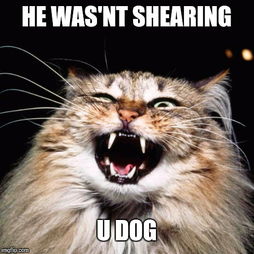 mad cat | HE WAS'NT SHEARING U DOG | image tagged in mad cat | made w/ Imgflip meme maker