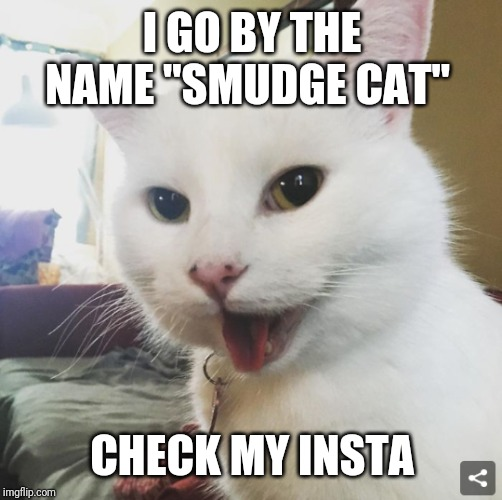 "Smudge | I GO BY THE NAME ""SMUDGE CAT"" CHECK MY INSTA 