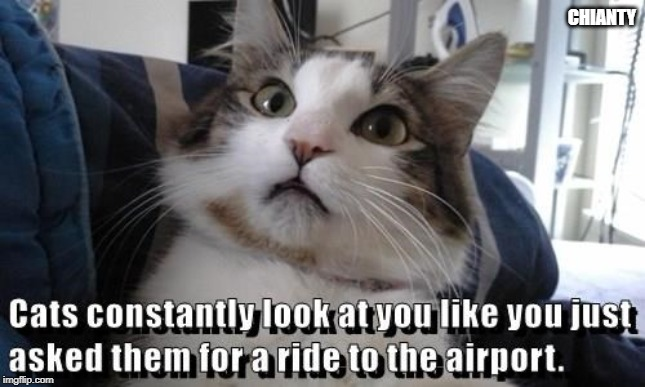 Cats | CHIANTY | image tagged in airport | made w/ Imgflip meme maker
