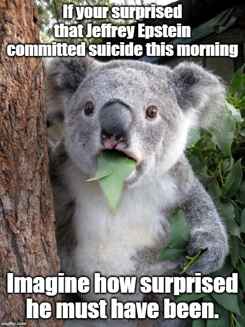 Surprised Koala Meme | If your surprised that Jeffrey Epstein committed suicide this morning Imagine how surprised he must have been. | image tagged in memes,surprised koala | made w/ Imgflip meme maker