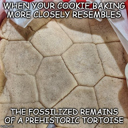 WHEN YOUR COOKIE BAKING MORE CLOSELY RESEMBLES THE FOSSILIZED REMAINS OF A PREHISTORIC TORTOISE | image tagged in cookies,fossils,yummy | made w/ Imgflip meme maker