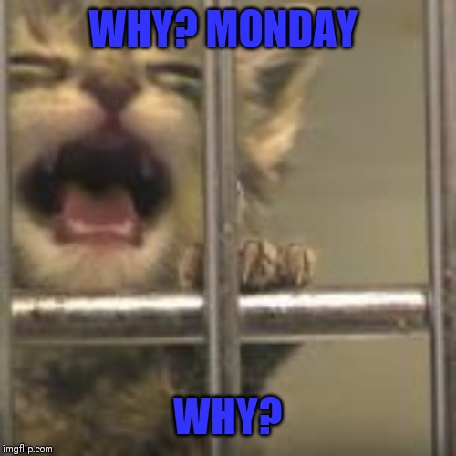 WHY? MONDAY WHY? | made w/ Imgflip meme maker