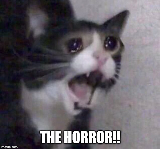 Crying Cat | THE HORROR!! | image tagged in crying cat | made w/ Imgflip meme maker