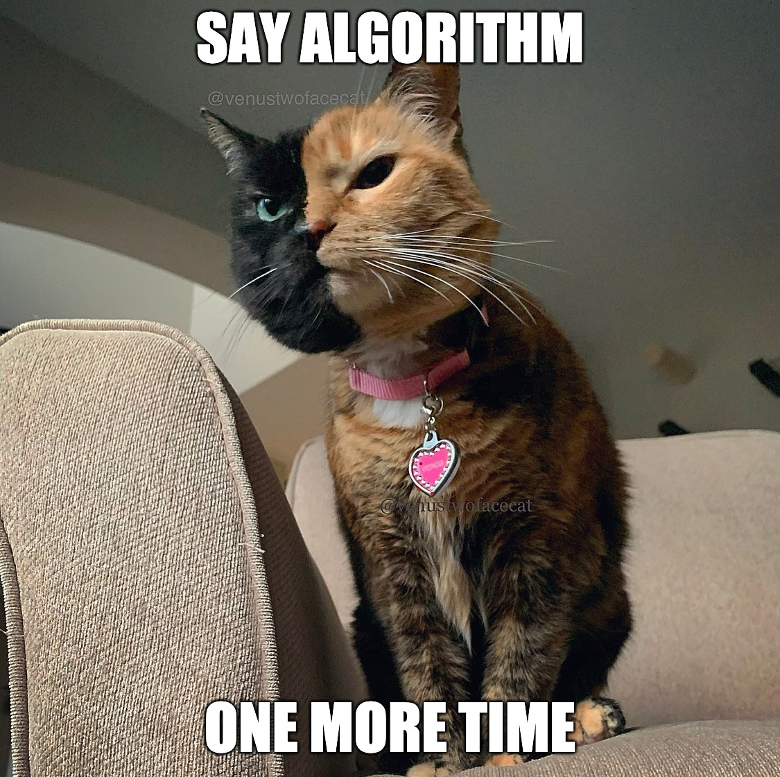 Social media algorithms got me like |  SAY ALGORITHM; ONE MORE TIME | image tagged in instagram,triggered,funny,angry cat,funny cat memes,cat meme | made w/ Imgflip meme maker