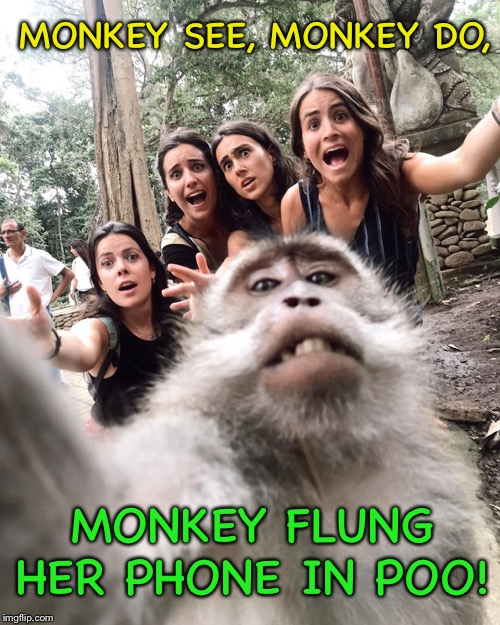 Silly monkey, pics are for chicks! | MONKEY SEE, MONKEY DO, MONKEY FLUNG HER PHONE IN POO! | image tagged in monkey,selfie,cellphone,poop,funny memes | made w/ Imgflip meme maker