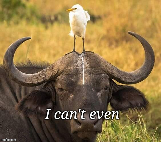 I can't even | image tagged in animals,sarcasm,can't even | made w/ Imgflip meme maker