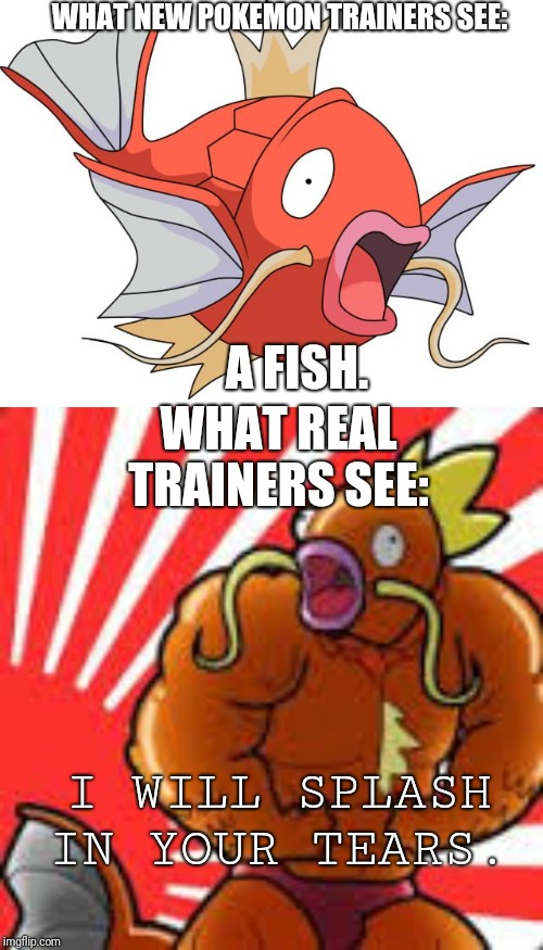 WHAT NEW POKEMON TRAINERS SEE: A FISH. WHAT REAL TRAINERS SEE: I WILL SPLASH IN YOUR TEARS. | image tagged in pokemon,magikarp pokemon | made w/ Imgflip meme maker