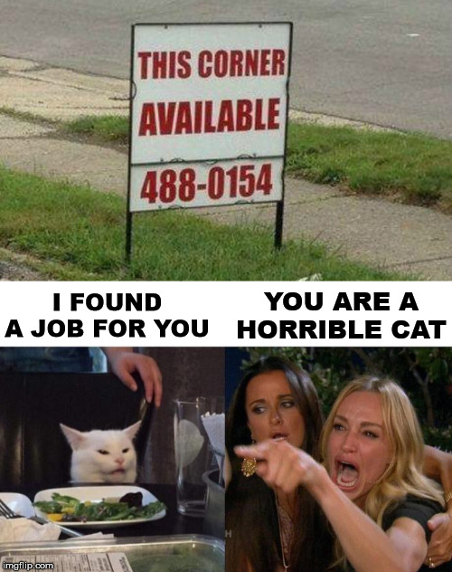 Looks like she is working this corner. |  YOU ARE A HORRIBLE CAT; I FOUND A JOB FOR YOU | image tagged in memes,woman yelling at cat | made w/ Imgflip meme maker